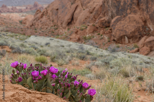 Fotobehang Zalm Cactus Bloom