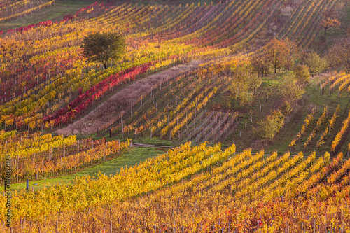Moravian autumn vineyards