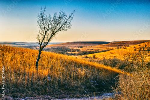 Keuken foto achterwand Beige Prairie Tree