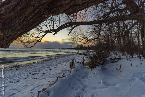 Foto op Plexiglas Canada A Winter Walk 2