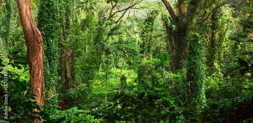 Foto Murales Tropical jungle
