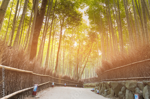 Fotobehang Bamboe Bamboo forest with walking way in Arashiyama Park, Kyoto Japan