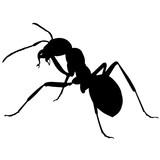 Ant - 187080625