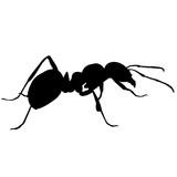 Ant - 187080636