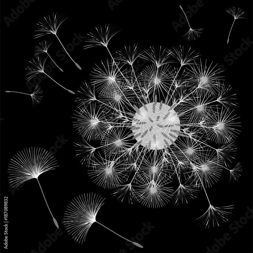 Abstract background of a dandelion for design. © niko180180