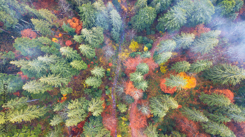 In de dag Olijf Aerial view of autumn pine forest with yellow and green trees in the mountains