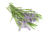 Lavender plant blossom - 187092629