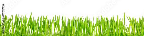 Fotobehang Panoramafoto s Panorama, grünes gras oder Ostergras vor weißem Hintergrund