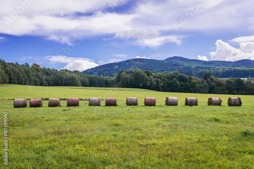 Field in Lusatian Mountains, part of Sudetes in Czech Republic Poster