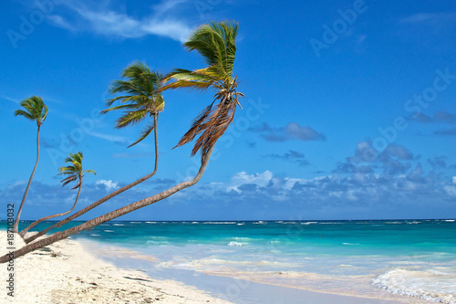 Palms on coast of exotic Caribbean beach