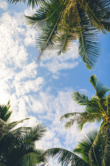 Branches of palms under sky background