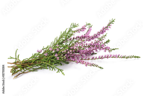 Foto Murales Purple heather flowers