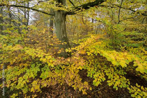 Foto op Plexiglas Honing Herbstlicher Wald