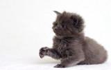 small kitten looks - 187137081