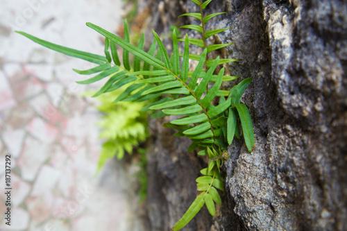 Foto Murales Planta verde