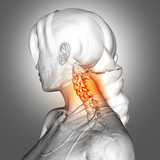3D female figure with neck bones highlighted