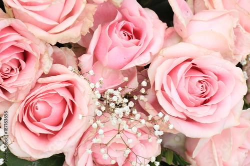 Big pink roses - 187163656