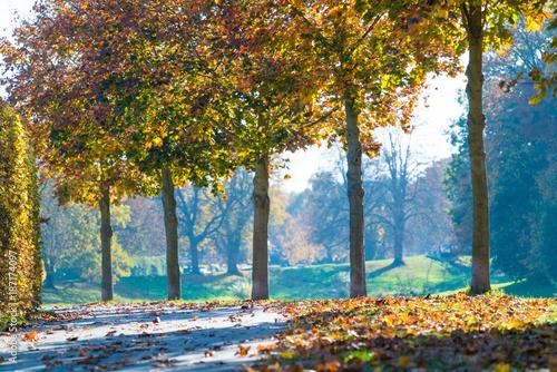 Fotobehang Herfst Road in autumn park yellow trees in autumn Park
