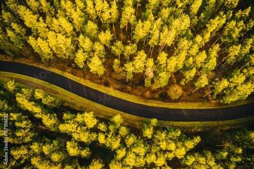 Fotobehang Oranje Aerial view on pine forest, road surrounded with pine trees from above