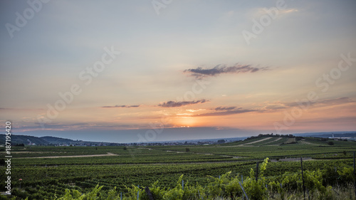 Fotobehang Beige sun rise over the green vineyards valley in sprint time