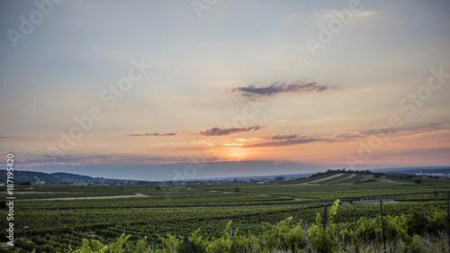 Keuken foto achterwand Beige sun rise over the green vineyards valley in sprint time