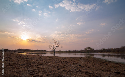Low angle sunset over an African lake with a lone tree and soft focus soil foreground.