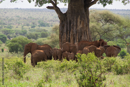 Aluminium Baobab Elephants Under the Baobab Tree #2