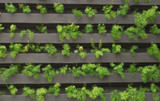 Vertical garden with young plants growing - 187209036