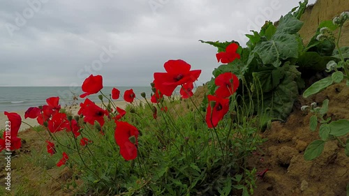 Seascape with poppies.