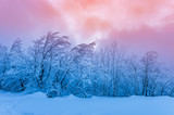 Winter mountain forest in snow, colorful sunset