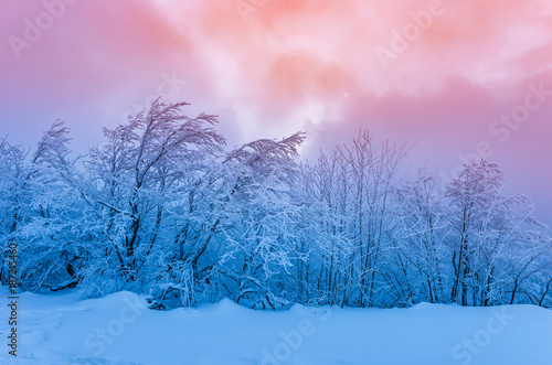 In de dag Lichtroze Winter mountain forest in snow, colorful sunset
