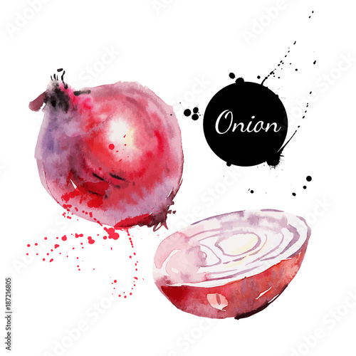 Red onion. Hand drawn watercolor painting on white background. Vector illustration