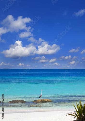Foto op Aluminium Tropical strand Schöner Maledivenstrand mit Fischreiher