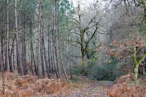 Foto op Plexiglas Weg in bos L'arbre Roi