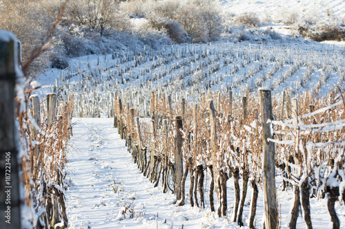 Poster Wijngaard vineyard covered with snow in winter