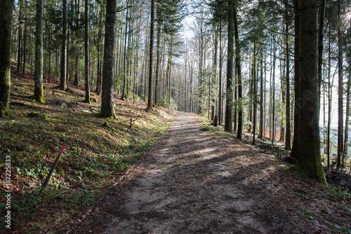 Papiers peints Route dans la forêt black forest germany forest walk