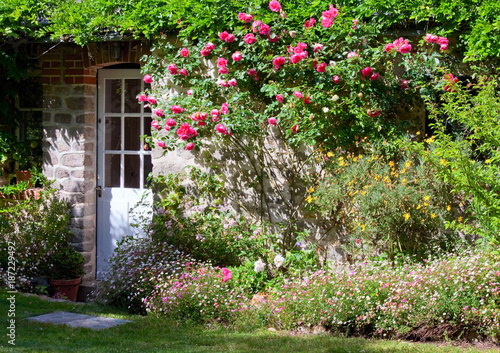Petits jardin fleuri et rosier sur façade de maison
