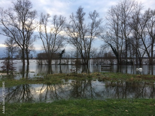 Hochwasser am Rhein - 187238845