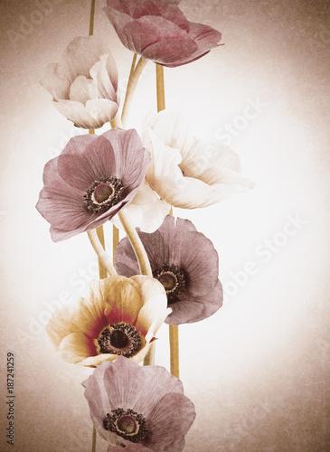 efekt vintage kwiaty orchidei