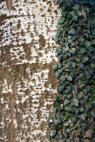 Tree bark abstract background - 187245205