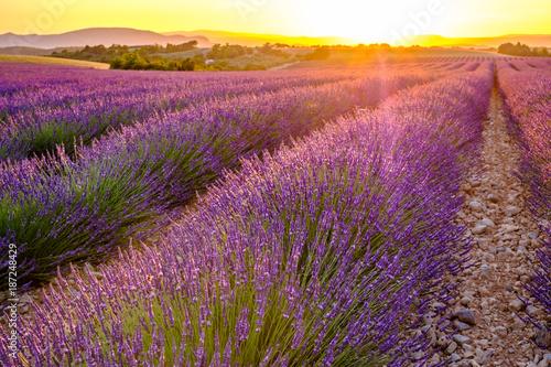 Keuken foto achterwand Lavendel Champ de lavande en été. Provence, France. Coucher de soleil.