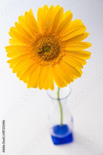 Fotobehang Gerbera yellow daisy