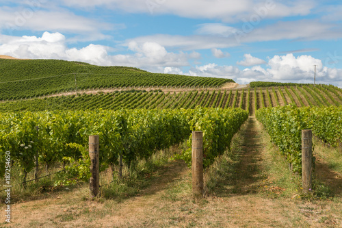 Fotobehang Wijngaard New Zealand countryside with vineyard and blue sky