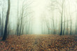 Artisctic photo of a bare forest in mysterious fog
