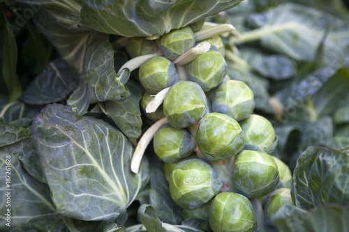 Foto op Canvas Brussel the Green Brussels sprouts on the market for sale