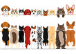 standing small dogs and cats front and back border set