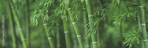 Bamboo forest - 187281624