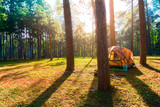 Camping tent in pine forest scene nature background - 187284010