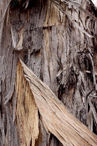 Gum tree bark texture - 187285610