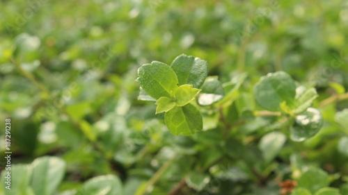 Leaf green on nature background. - 187291238